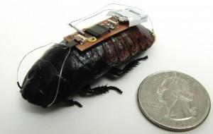afstandsbestuurbare-kakkerlak