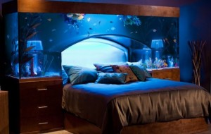 Bed/aquarium