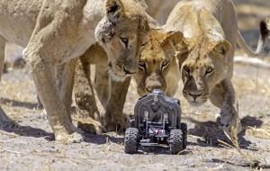 Een op afstand bestuurbare camera waarmee gevaarlijke dieren van dichtbij kunnen worden vastgelegd