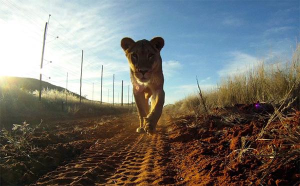 gopro-leeuw