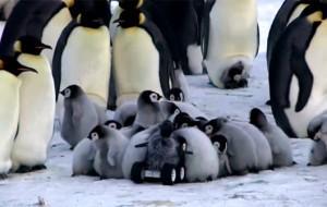 robot-pinguin