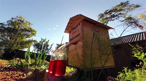 honey-flow-bijenhoning