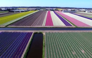 keukenhof-drone-video