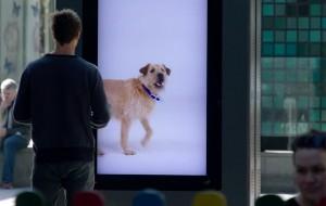 adoptie-honden-voorbijgangers