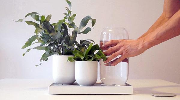 pikaplant-tableau-planten-water