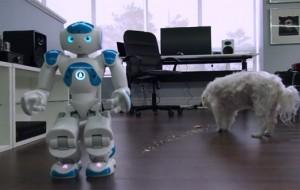 robot-hond-voeren