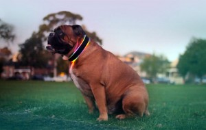 buddy-high-tech-honden-halsband