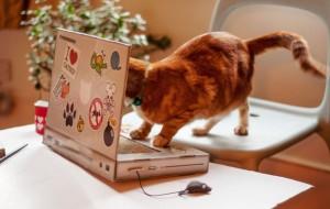 laptop-katten