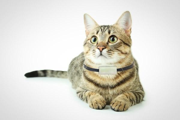 weenect-cats-halsband-katten