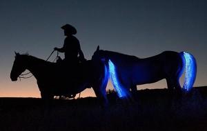 tail-lights-paard-led