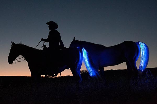 tail-lights-paard-led