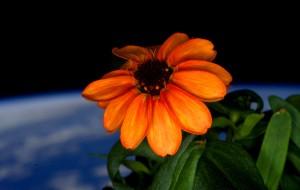 bloem-ruimte