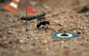 mieren-computerspel