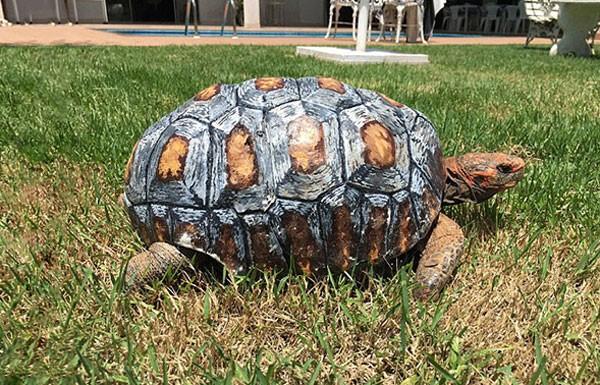 schildpad-3d-printer