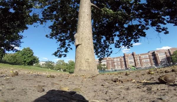 Als een eekhoorn een GoPro steelt levert dat leuke beelden op