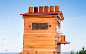 honey-flow-honing