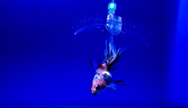 MIT's nieuwe onderwaterrobot is gemaakt van gel