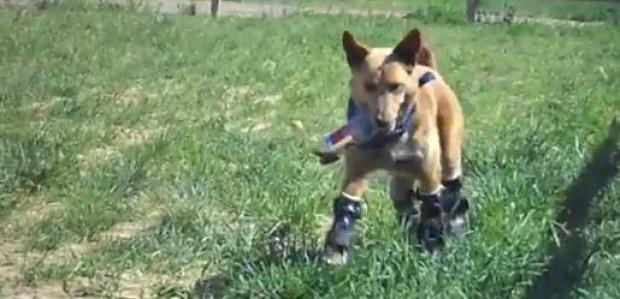 Hond met bionische poten