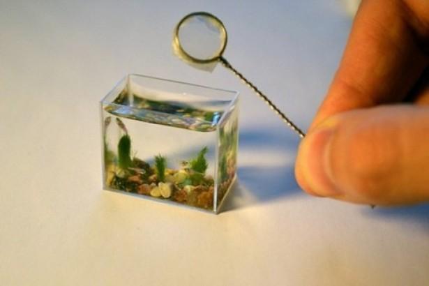 's Werelds kleinste aquarium