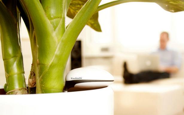 Wi-Fi sensor houdt planten in leven