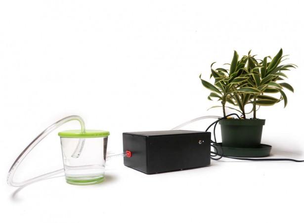 Deze plant geeft zichzelf water
