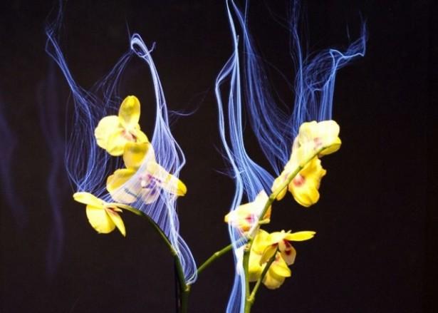 Interactieve planten