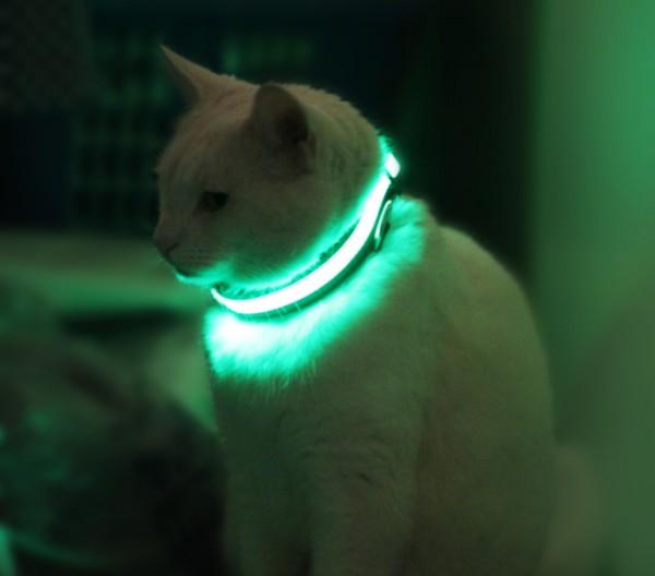 Halo Mini halsband redt dierenlevens