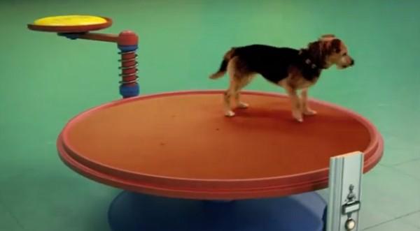 Briljant! Rube Goldberg machine met honden