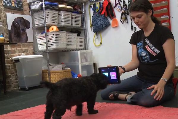 Hondenschool in NYC leert honden omgaan met iPads