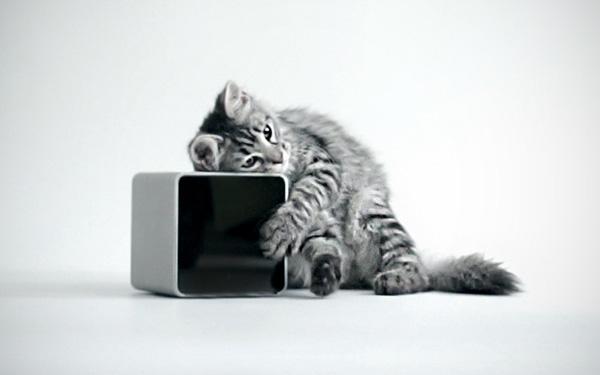 PetCube: dé gadget voor iedere huisdierbezitter