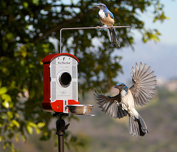 Bird Photo Booth: een fotohokje voor vogels