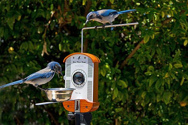 bird-photo-booth-vogel-fotohokje2