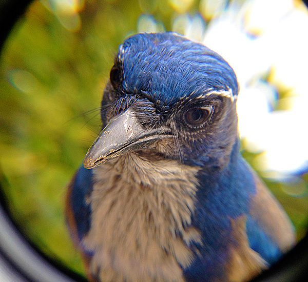 bird-photo-booth-vogel-fotohokje5