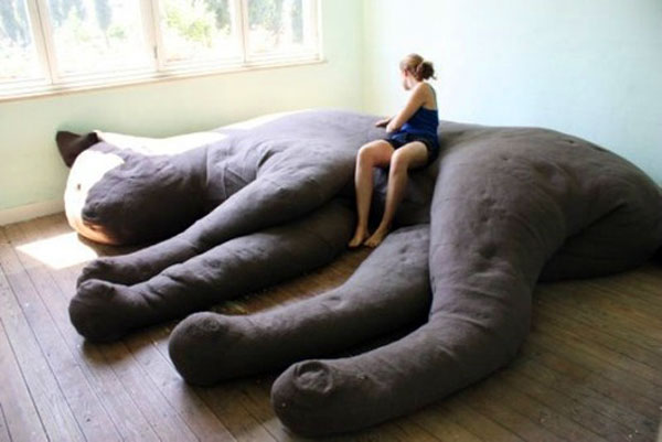 cat-couch-unfold