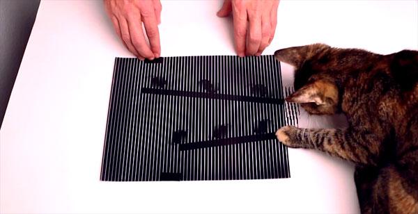 Zelfs katten vallen voor de optische illusies van Brusspup