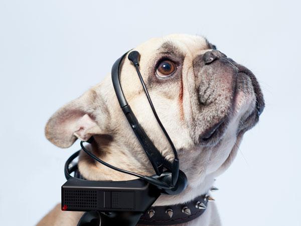 De No More Woof headset vertaalt de gedachten van je hond naar het Engels