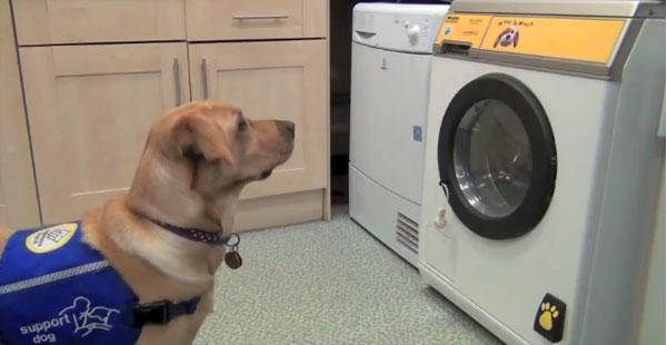 Deze wasmachine voor hulphonden reageert op blafcommando's