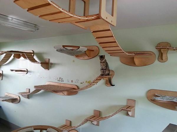 De natte droom van iedere kat