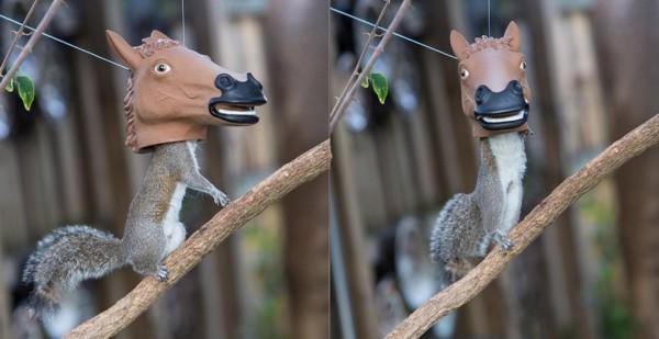 De beste manier om de eekhoorns in je tuin eten te geven