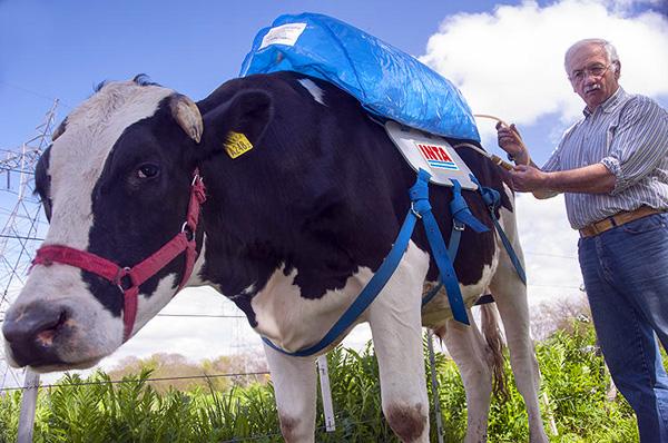 Deze koeienrugzak slaat scheten op