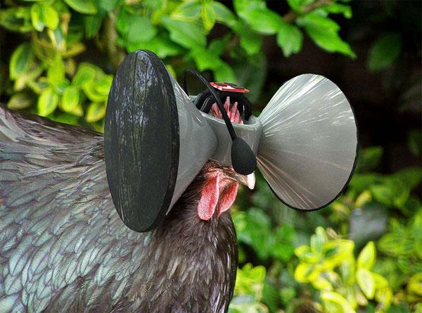 Second Livestock: een virtual reality bril voor kippen