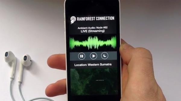 rainforest-connection2