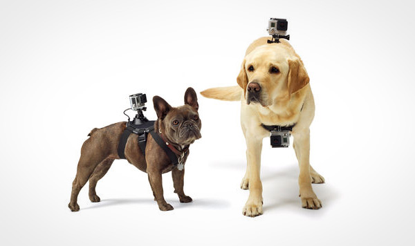 GoPro Fetch: bekijk het leven door de ogen van je hond