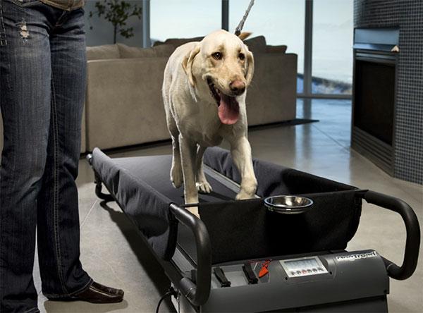 PetZen DogTread: een loopband voor honden