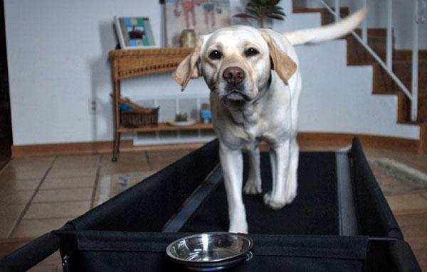 petzen-loopband-honden3