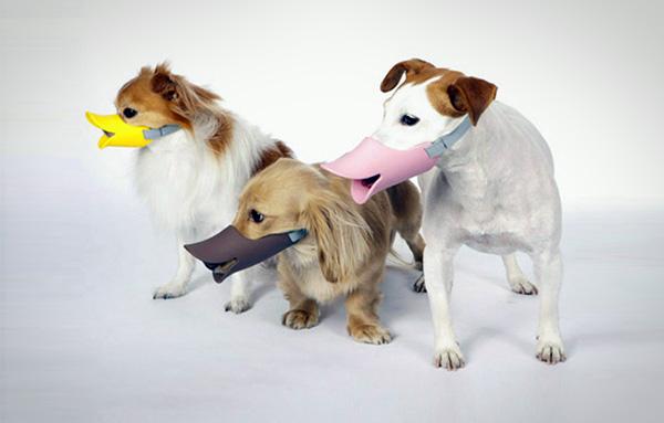 Met deze muilkorf ziet je hond eruit als een eend
