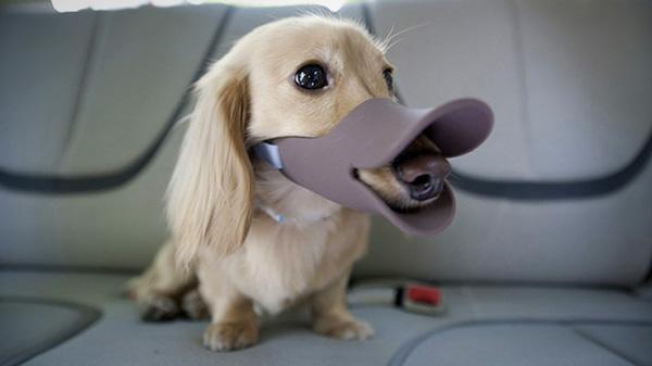 hond-eendenbek-oppo-quack3