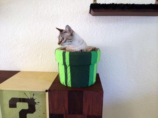 mario-cat-complex-katten3