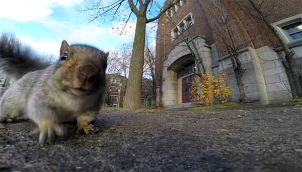 Ook eekhoorns weten wel raad met GoPro camera's