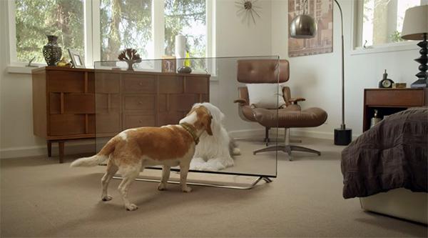 Huisdieren snappen niets van LG's doorzichtige televisie